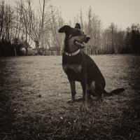 Isis Beauceron